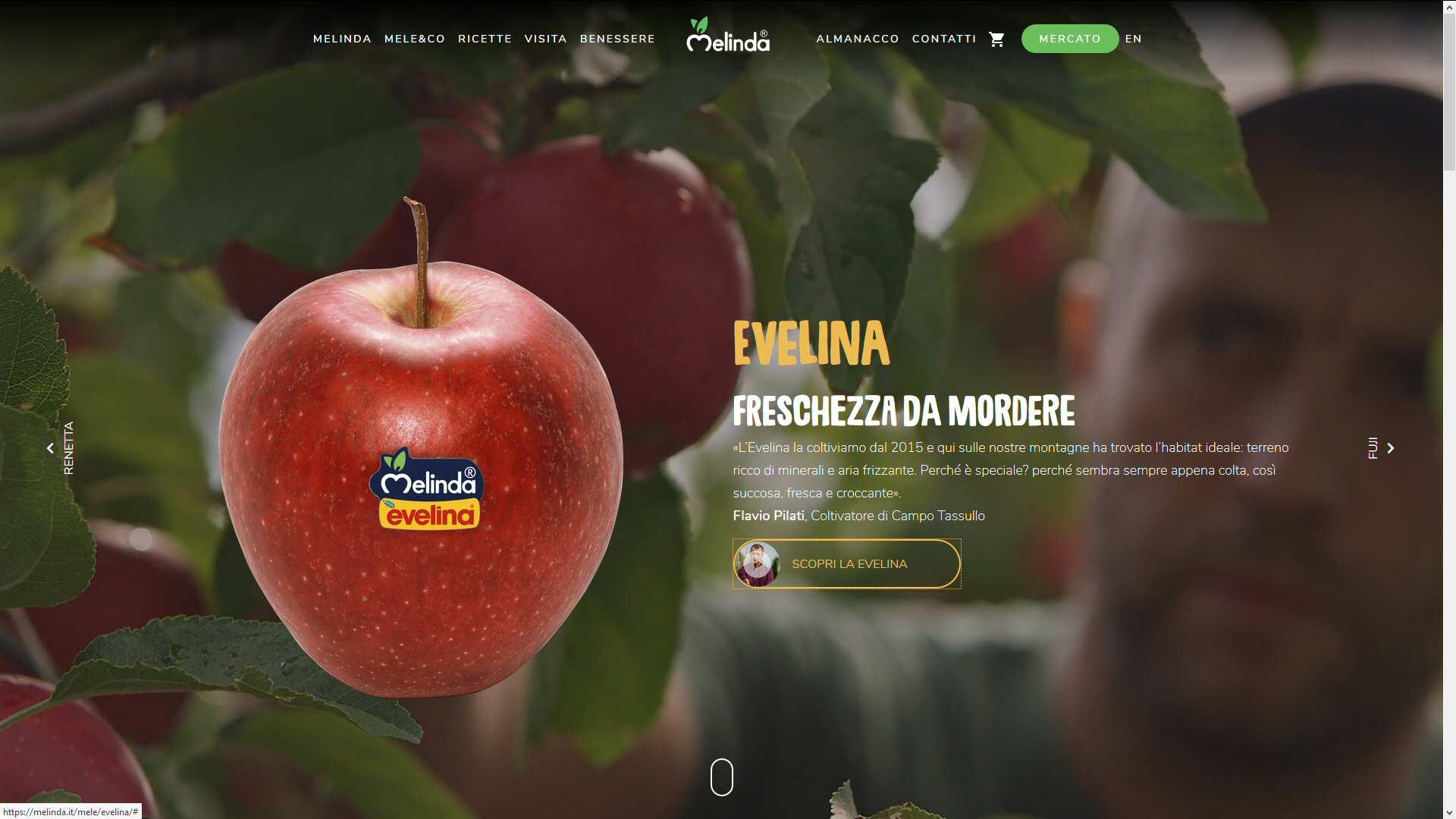 Melinda: strategia digitale e concept, contenuti/SEO/website
