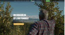 MELINDA: ridisegno completo del sito web
